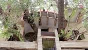 Nhà 4 tầng bao quanh cây vả 150 năm tuổi