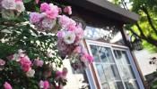 Mẫu sân vườn nhỏ trước nhà đẹp, thu hút mọi ánh nhìn