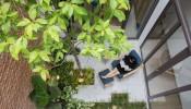 Giếng trời trong nhà nên trồng cây gì thì hợp phong thuỷ ?