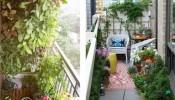 3 cách chống nóng hiệu quả cho nhà chung cư trong mùa hè