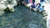 Vingroup được chấp thuận chủ trương lập Quy hoạch 1/500 dự án cạnh 'suối cá thần' ở Thanh Hoá