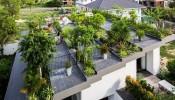 Kinh nghiệm làm vườn rau, vườn hoa trên sân thượng đầy đủ nhất