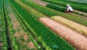 Người dân có được phép đổi đất nông nghiệp?