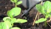 Điểm danh 3 phương pháp tưới cây hiệu quả được ưa chuộng hiện nay