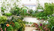 Một số phương pháp thiết kế sân vườn nhỏ cho nhà phố