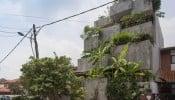 Planter Box House: Sự hòa quyện giữa con người và thiên nhiên