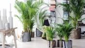 5 loại cây cảnh trồng trong nhà mang đến tài lộc, thịnh vượng