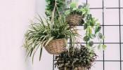 Những ý tưởng thiết kế vườn treo trong nhà độc đáo