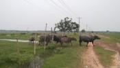 Dự án Sài Gòn Safari bị 'cắt' chức năng nhà ở, nghỉ dưỡng