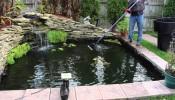 Những lưu ý quan trọng khi xây bể cá ngoài trời