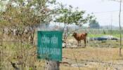 Treo 15 năm, dự án công viên Safari bị cắt chức năng ở, nghỉ dưỡng