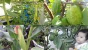 5 lời khuyên hữu ích cho vườn rau sạch tại nhà của bạn