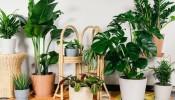 8 loại cây lọc không khí siêu tốt cho không gian nhà bạn