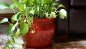 Tổng hợp 10 loại cây nên trồng trong nhà đem lại may mắn tài lộc