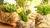 Hướng dẫn chọn loại cây cảnh hợp phong thủy với tuổi Mùi