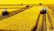 3 trường hợp được miễn thuế sử dụng đất nông nghiệp