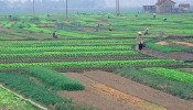 Số tiền phải nộp khi chuyển đất nông nghiệp sang đất ở