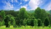 Điều kiện cây lâu năm được cấp Sổ đỏ
