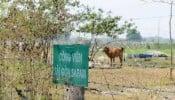 TP.HCM: Kiểm điểm nhiều đơn vị liên quan đến dự án Sài Gòn Safari