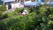 Kinh nghiệm thiết kế vườn trên mái cho nhà phố
