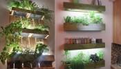 Biến căn bếp nhà bạn trở nên hút mắt với vườn thảo mộc mini
