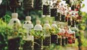 Tận dụng đồ bỏ đi để làm vườn vừa tiết kiệm vừa thân thiện với môi trường