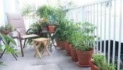 Sáng tạo không gian xanh tại ban công nhà chung cư bằng vườn cây các loại