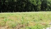 """Chia sẻ kinh nghiệm để mua đất nông nghiệp tránh """"tiền mất tật mang"""""""