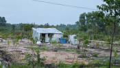 Đất trồng cây có nhà ở được xác định là loại đất gì?