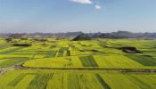 Hạng đất tính thuế sử dụng đất nông nghiệp từ 2021 - 2025