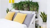 5 loại cây trồng thanh lọc không khí tốt nhất cho phòng ngủ