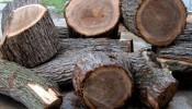 Điều gì tạo nên cho gỗ óc chó sức hấp dẫn không thể cưỡng lại?
