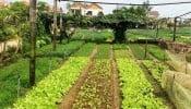 Quy định cho thuê, sử dụng, đền bù đất công ích 5%