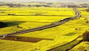 Hạng đất tính thuế sử dụng đất nông nghiệp giai đoạn 2021 - 2025