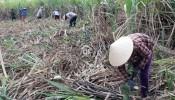 Những thủ tục, pháp lý , quy định sử dụng đất loại HNK theo quy định hiện hành