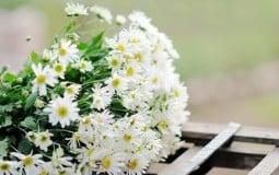 Chọn hoa Tết theo mệnh để cả năm sung túc, tài lộc dồi dào