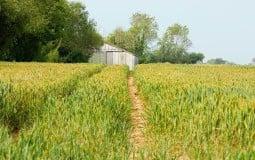 Chuyển đất ao thành đất lúa có được không?