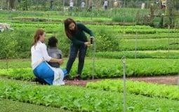 Đấu giá 'đất vàng' ở làng rau nổi tiếng Hội An