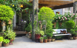 Vườn nhà tươi mát của nữ doanh nhân bỏ phố về quê