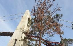 Vì sao rừng thông tại Khu du lịch TTC World Đà Lạt đang bị chết cháy?