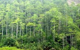 Chuyển mục đích sử dụng hơn 1.560 ha đất rừng