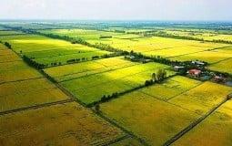 Long An được chuyển mục đích sử dụng hơn 81ha đất lúa