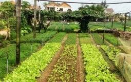 Nắm rõ điều này khi chuyển đổi đất nông nghiệp sang đất thổ cư