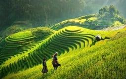 Sơn La sẽ có Khu bảo tồn hệ sinh thái nông nghiệp hơn 1.500ha tại Mộc Châu