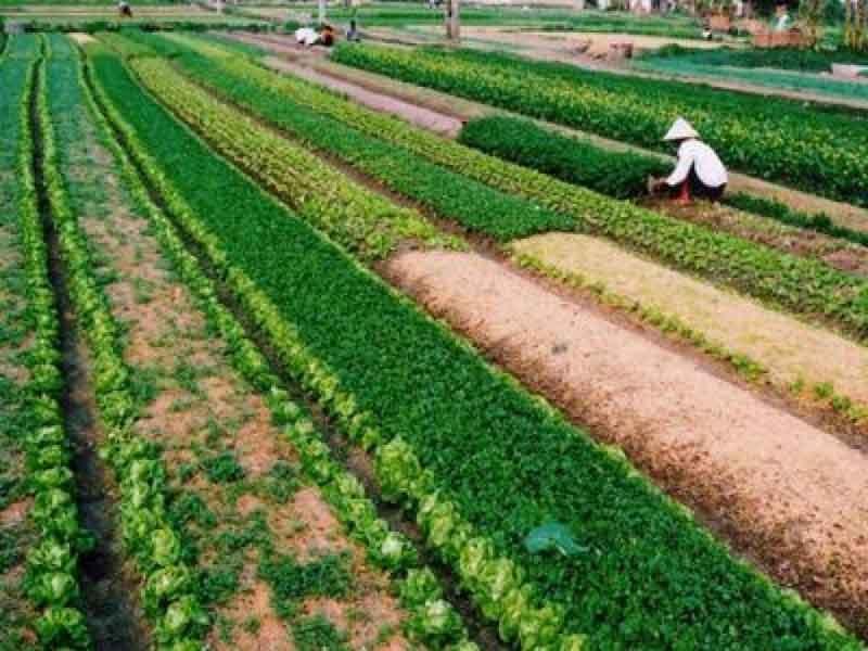 Người dân được tự đổi đất nông nghiệp cho nhau?