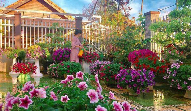 Việc cần làm để trang trí sân vườn nhỏ đẹp mắt dịp năm mới